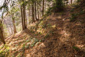 Komaj vidna pot proti utrdbi št. 2. Foto: Grega Žorž