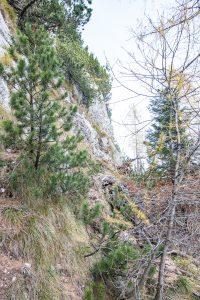 Pot od utrdbe št. 2 proti utrdbi št. 1. Foto: Grega Žorž