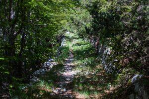 Pot Tolminka - Prehodci. Foto: Grega Žorž